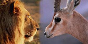 aslan-ve-ceylan Rekabet