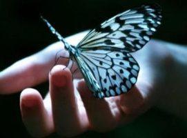 avuctaki-kelebek-271x200 İyilik Hikayeler