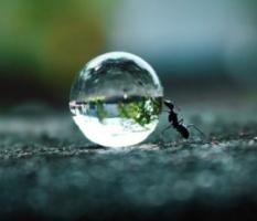 karinca-ve-ibrahim Yardımseverlik İyilik Hikayeler