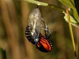 kozadaki-kelebek Yardımseverlik Emek Kısa hikayeler